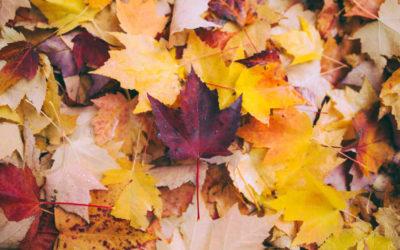 Jobs for Autumn