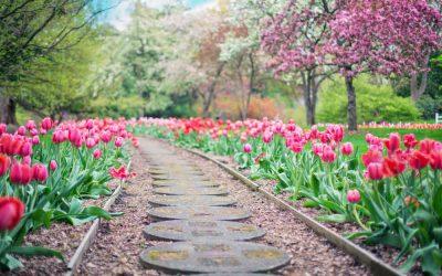 5 Spring Gardening Tasks You Can Start Now