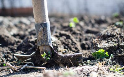 How to Improve Your Waterlogged Garden That Has Clay Soil